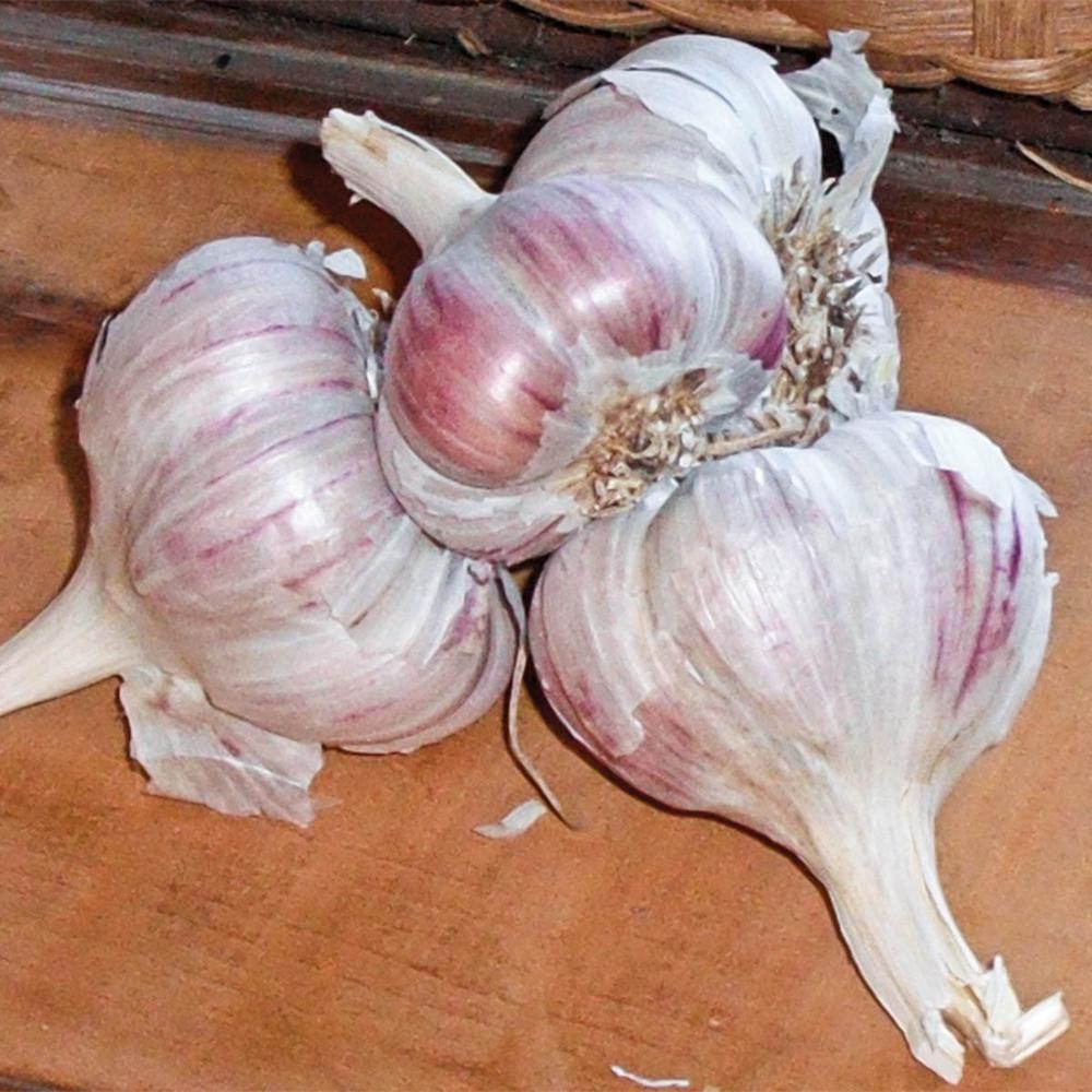 Inchelium Red Softneck Garlic Bulb (1-Pack)