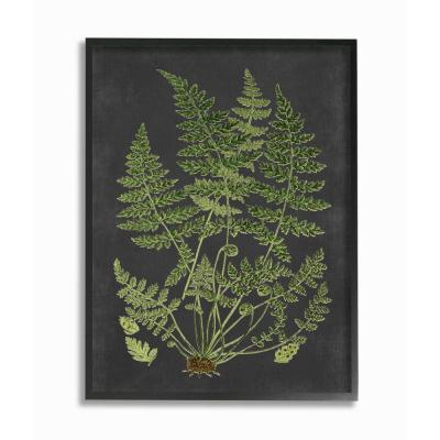 """Stupell Industries """"Botanical Drawing Green Black Design""""by Lettered and Lined Framed Abstract Wall Art 30 in. x 24..."""