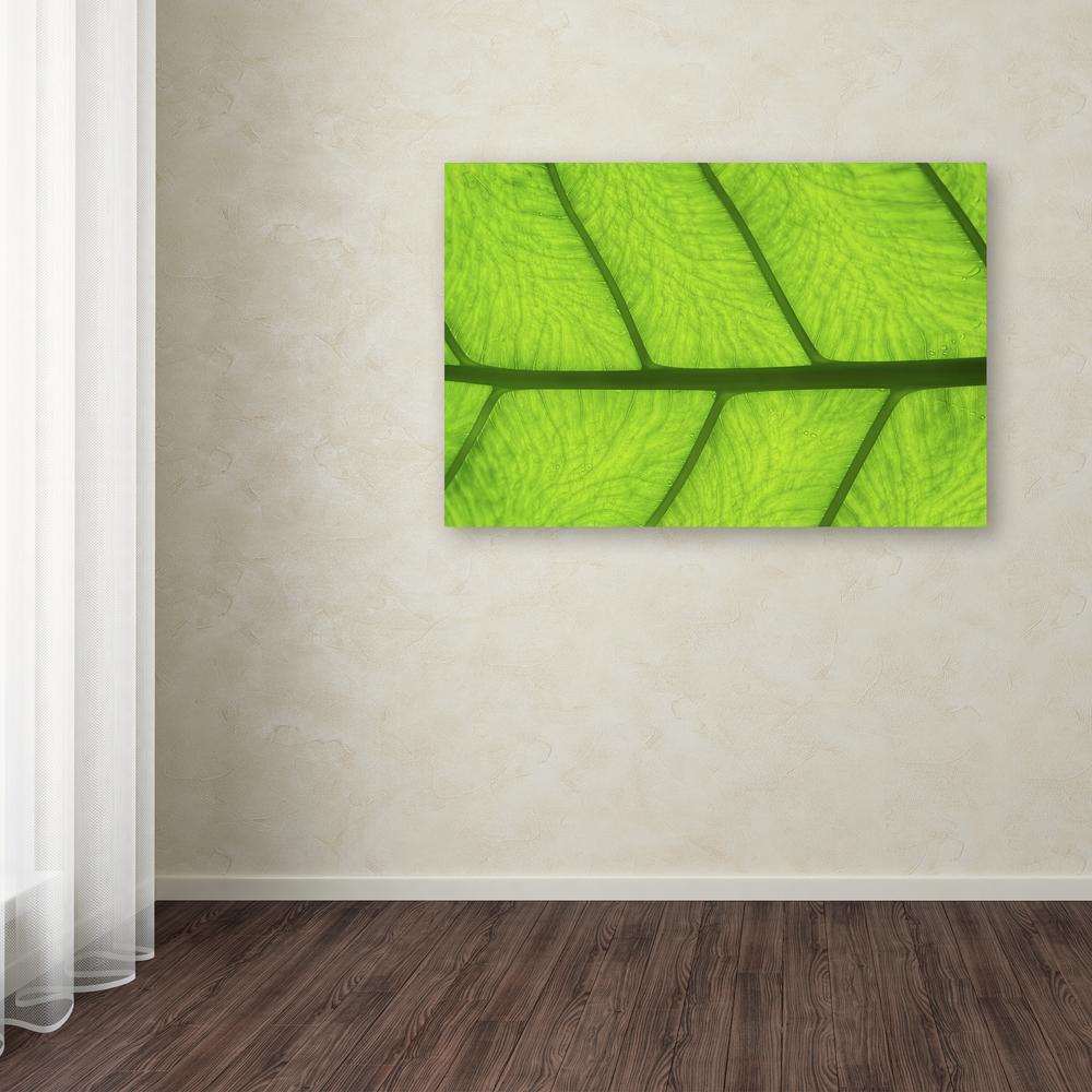 Trademark Fine Art 16 in. x 24 in. ''Leaf Texture III''