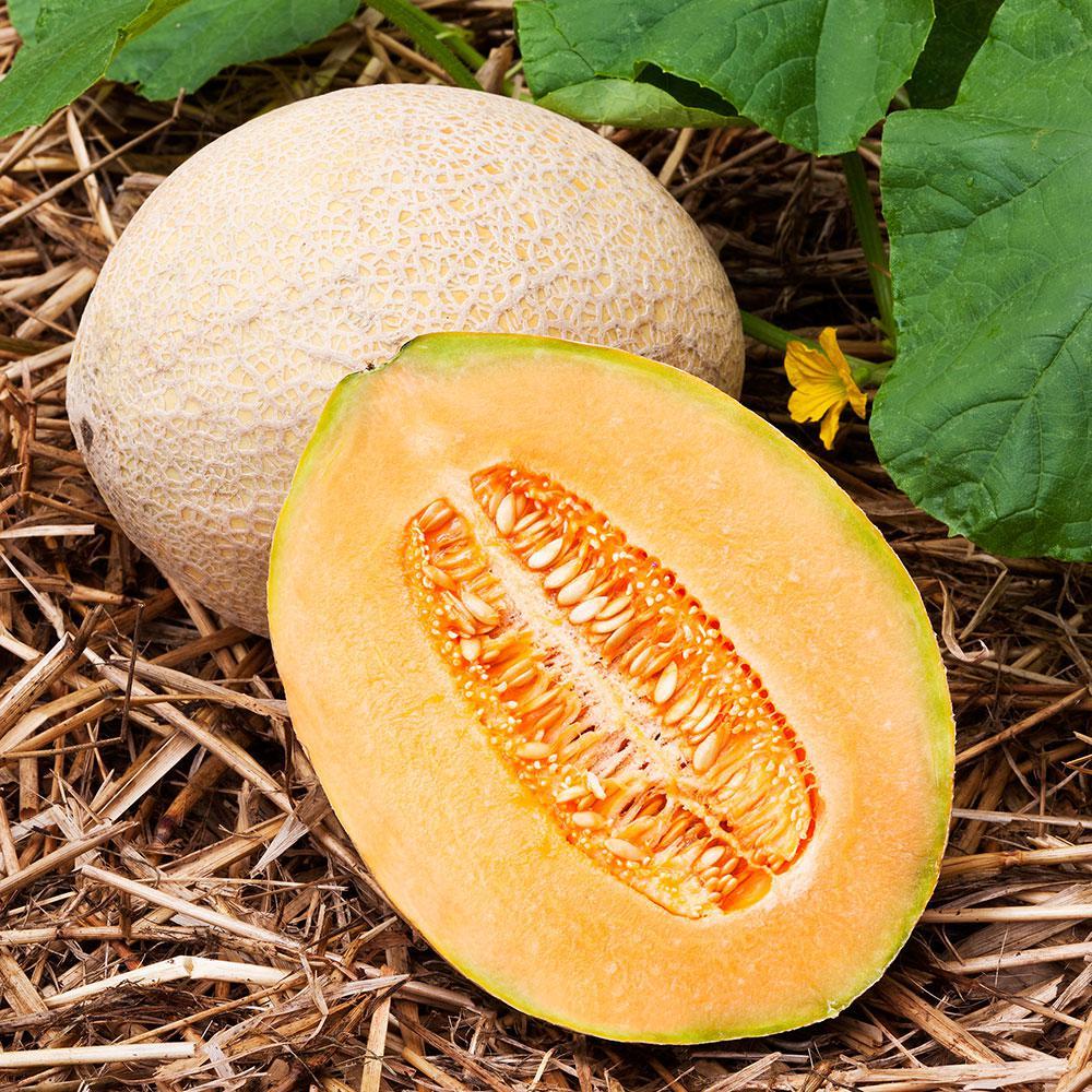 4.5 in. Cantaloupe-Hales Best Jumbo