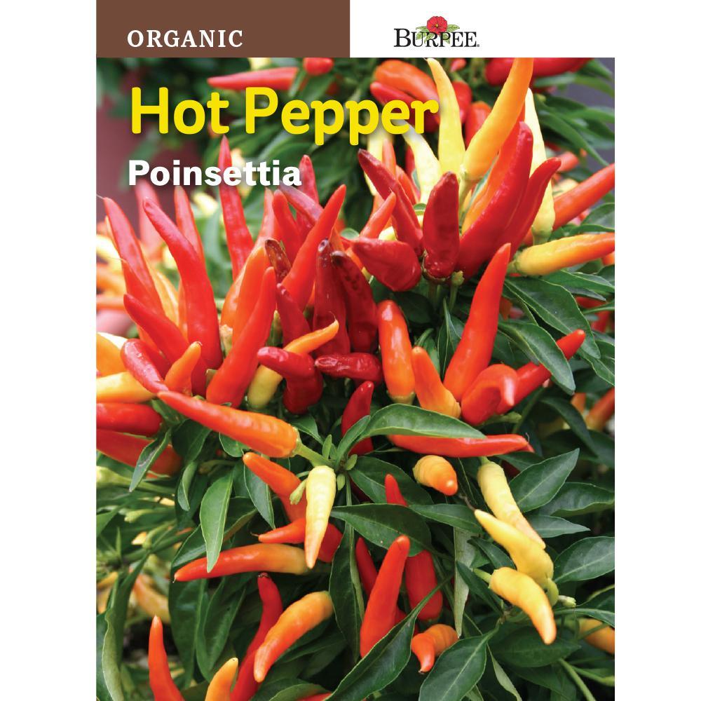 Burpee Pepper Hot Poinsettia Organic Seed 68778 The Home Depot