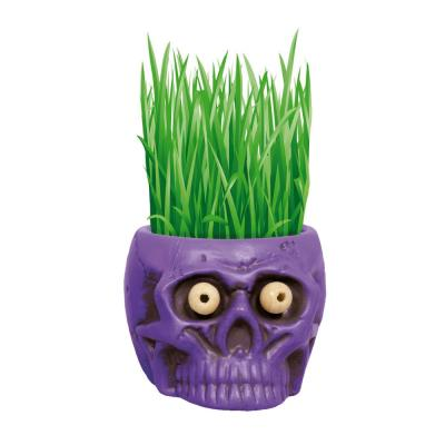 1 Qt. Hair Growing Halloween Purple Skull Kit Barley Grass