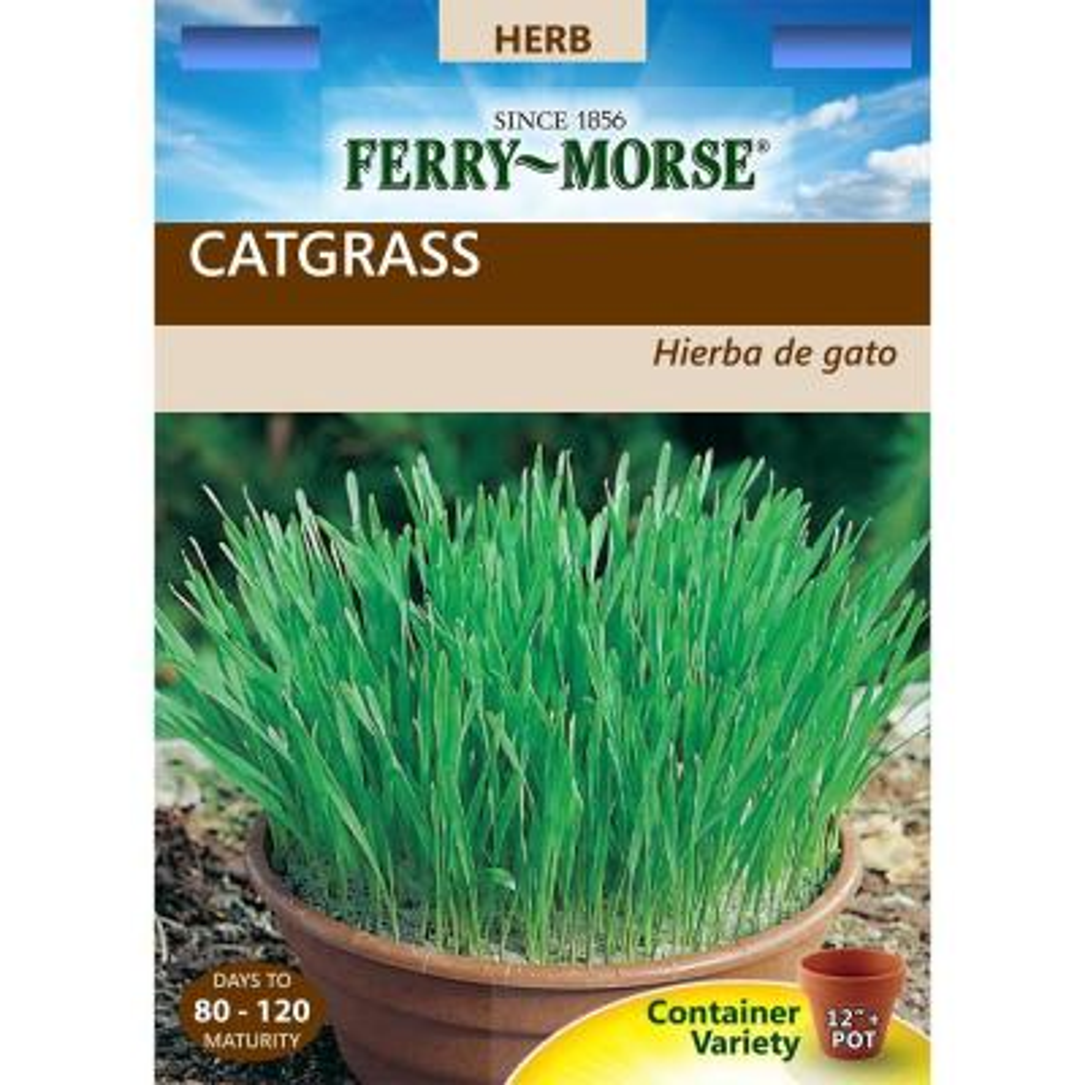 Catgrass, VNS Oats Seed