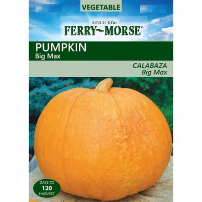 Pumpkin Big Max Seed
