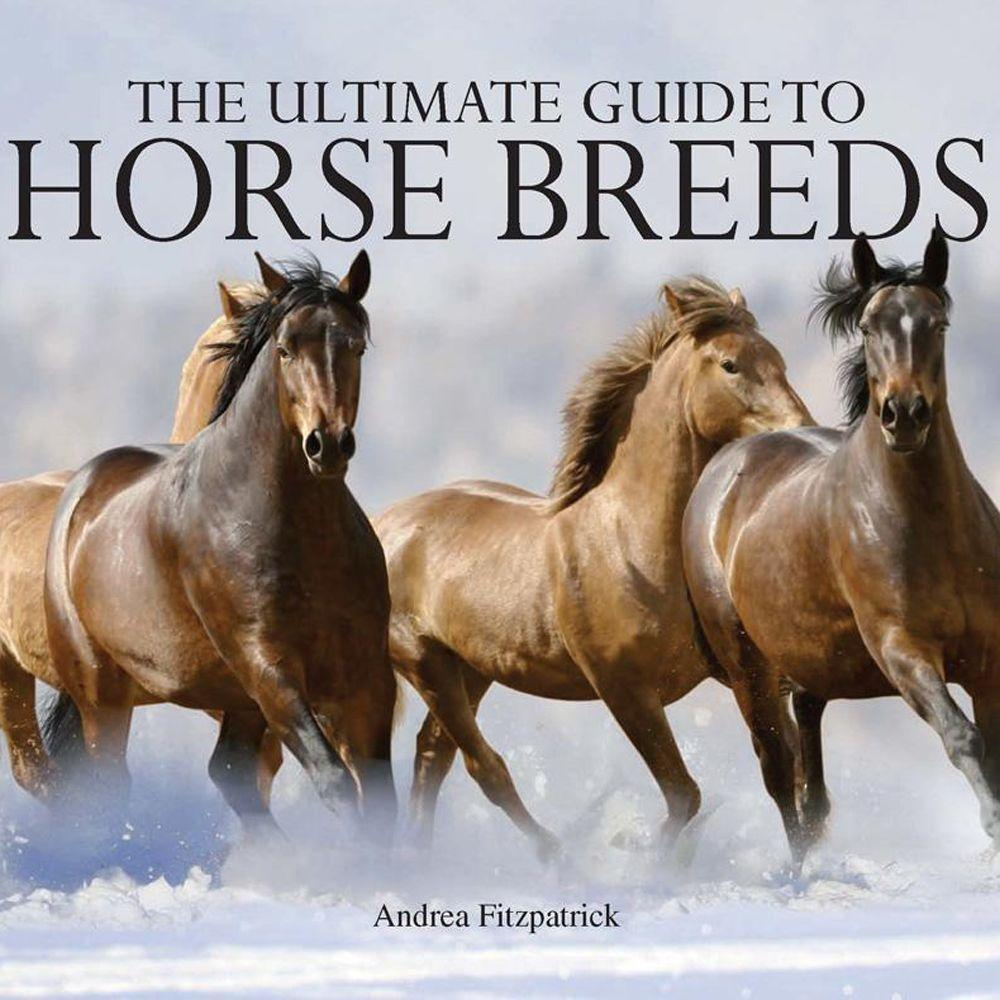 null The Ultimate Guide to Horse Breeds