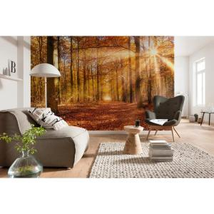 Komar Autumn Forest Wall Mural 8 068 The Home Depot