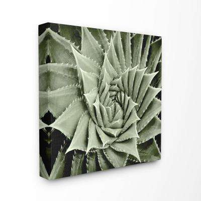 "24 in. x 24 in. ""Green Spiked Swirling Succulent Bloom Botanical"" by Artist Mia Jensen Canvas Wall Art"
