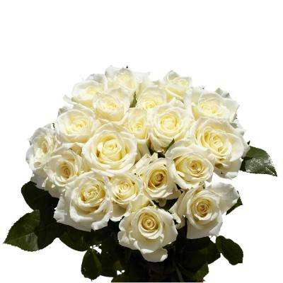 Fresh White Roses (100 Stems)