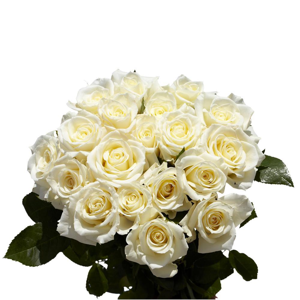 Fresh White Roses (100 Stems)