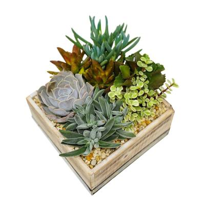 1 Gal. Succulent Plant Combo in 8 In. Wood Box
