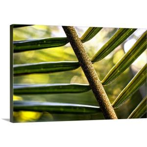 """""""Close up of Palm Leaves"""" by Circle Capture Canvas Wall Art"""
