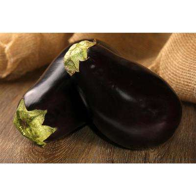 4.25 in. Grande Proven Selections Classic Eggplant Live Plant Vegetable (Pack of 4)