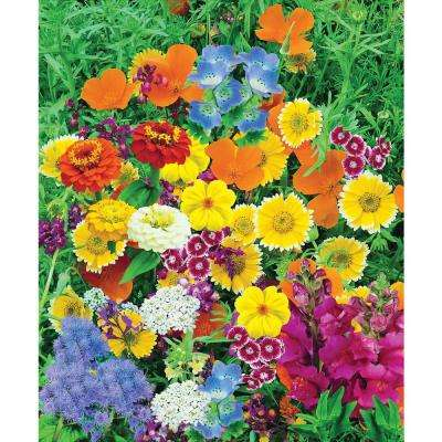 Magic Carpet Mix, Multiple Varieties with Many Colors (300 Seed Packet)