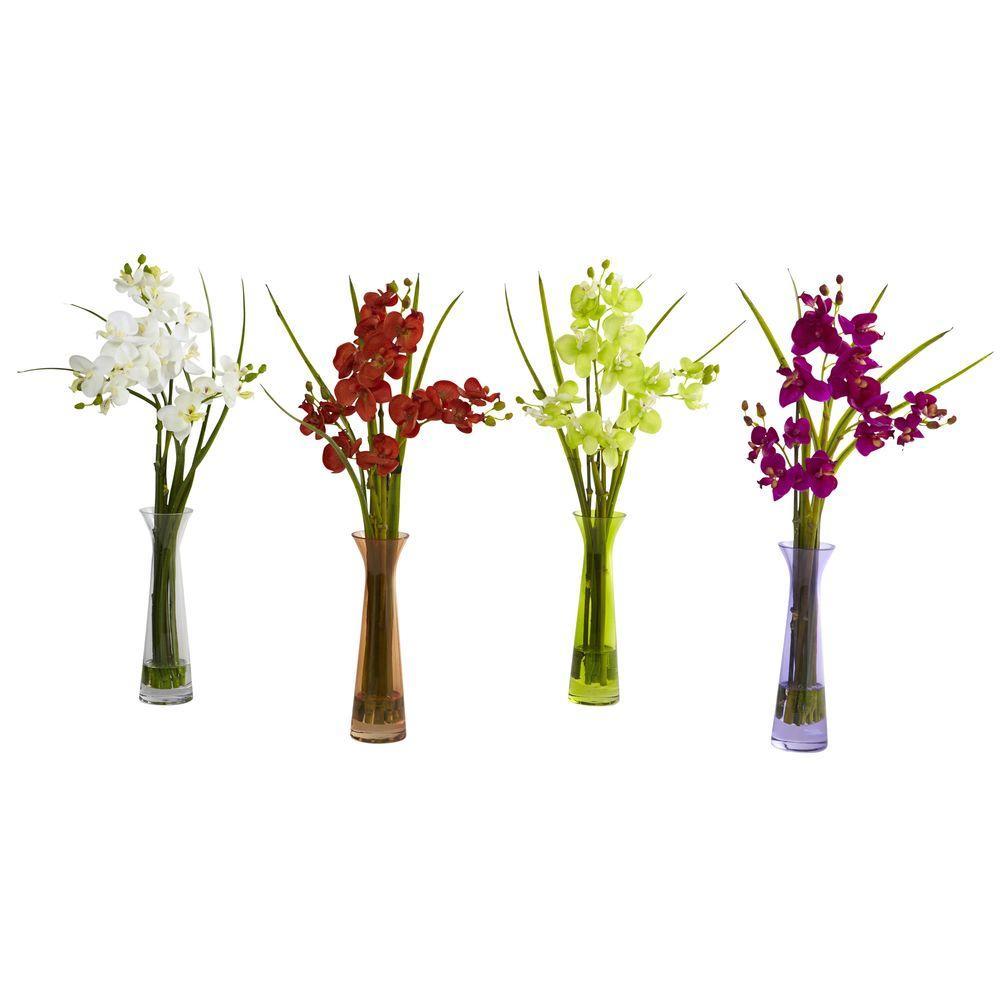 Mini Phalaenopsis with Colored Vase (Set of 4)