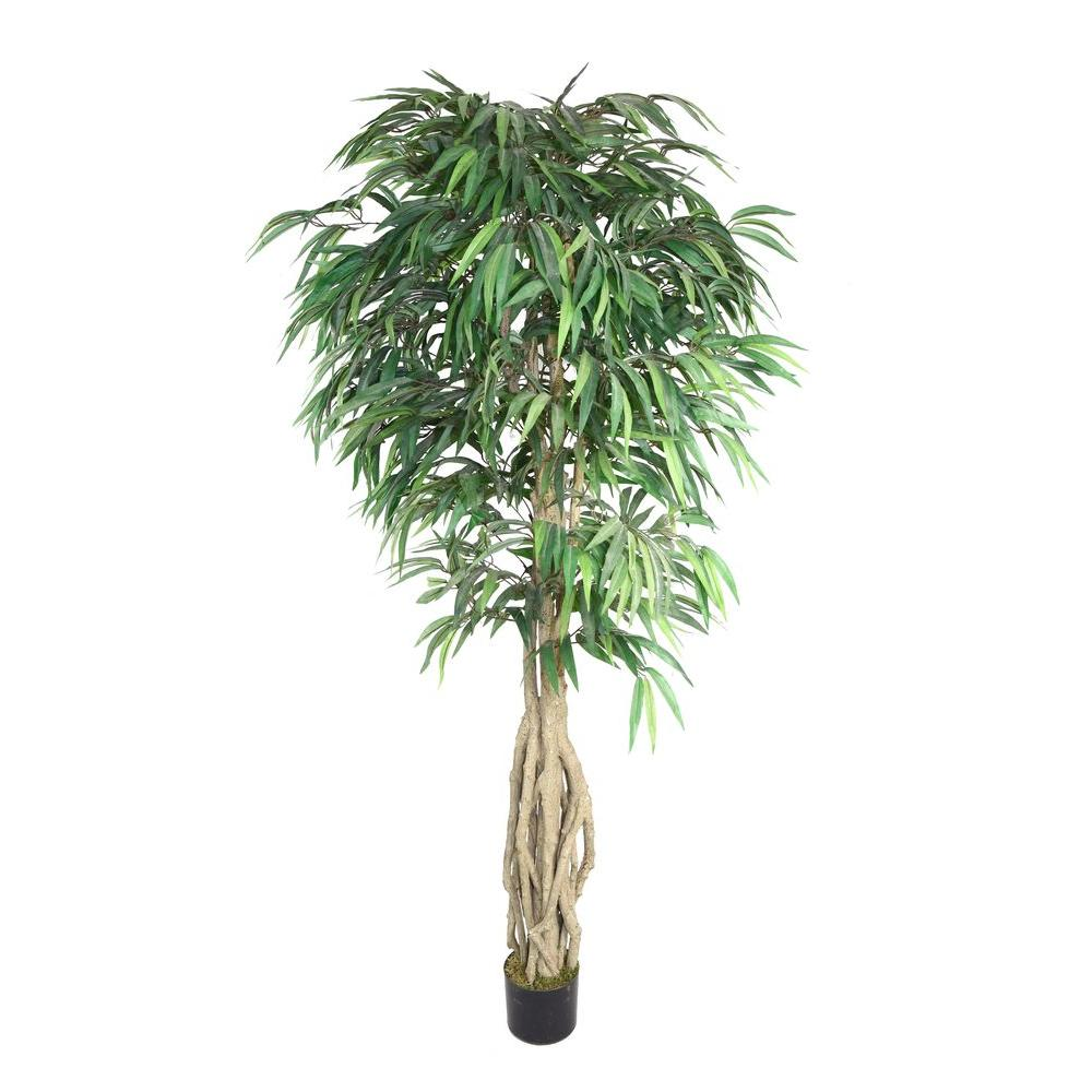38 in. x 38 in. x 78 in. H Willow Ficus