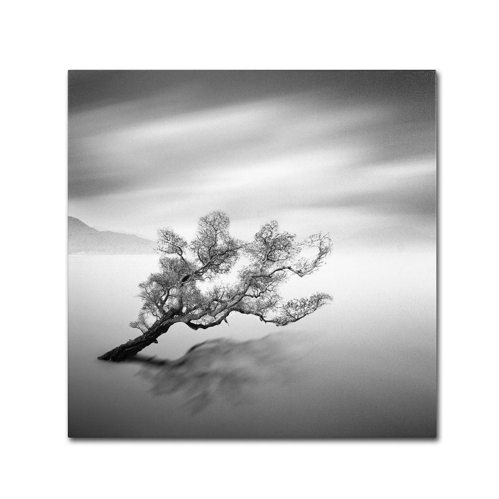 Trademark Fine Art 24 in. x 24 in. Water Tree VI Canvas Art