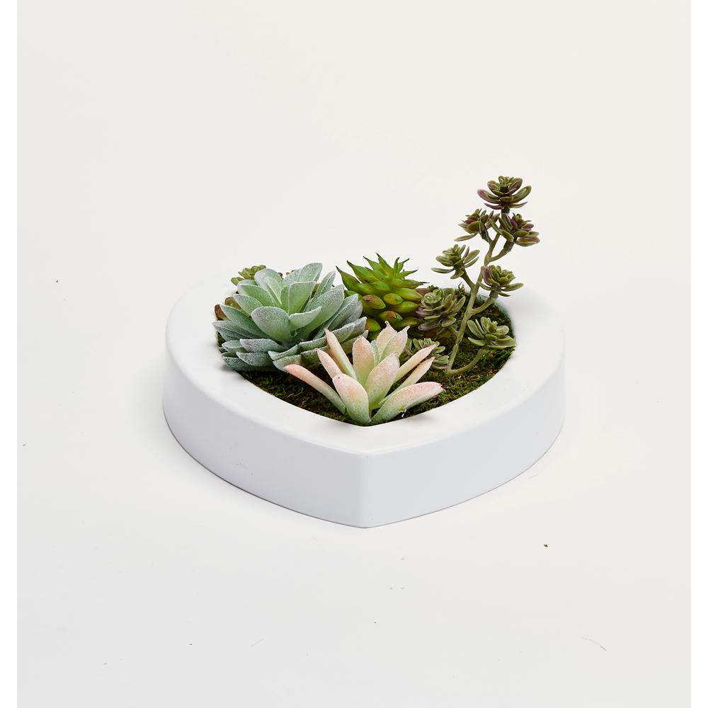 Worth Imports Mixed Succulents in 7 in. Heart Shaped White Plastic Container