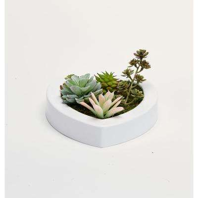 Mixed Succulents in 7 in. Heart Shaped White Plastic Container