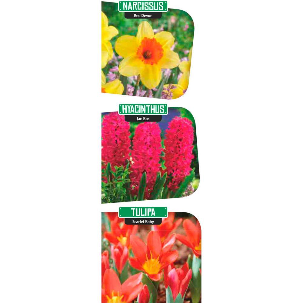Red Flowering Lasagna Bulbs Mixture (11-Pack)