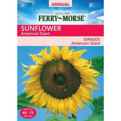 Sunflower American Giant Seed