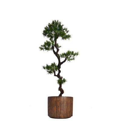 53 in. Tall Yacca Tree in Planter