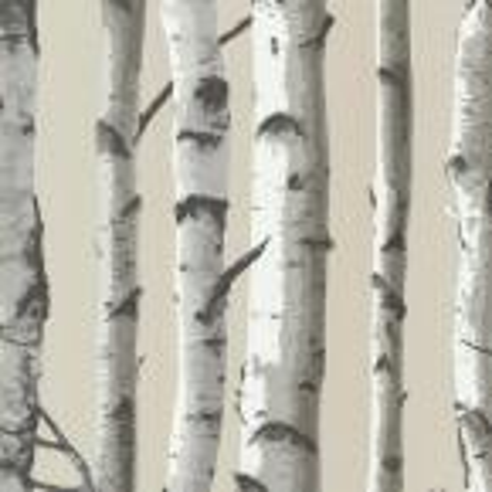 Brewster 8 in. x 10 in. Irvin Grey Birch Tree Wallpaper Sample