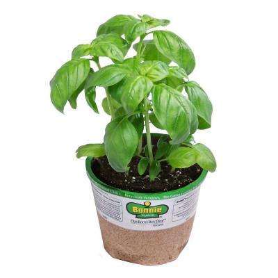4 in. 14.6 oz. Organic Basil
