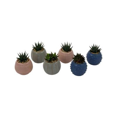 Pure Beauty Farms 3 in. Succulent in Ceramic (6-Plants)