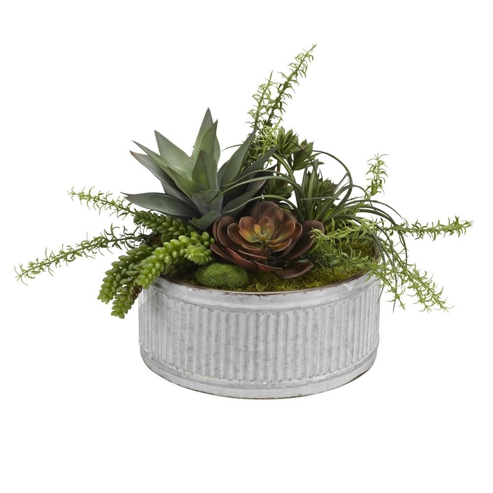 Indoor Echeveria, Aloe and Assorted Succulents in Round Tin Planter
