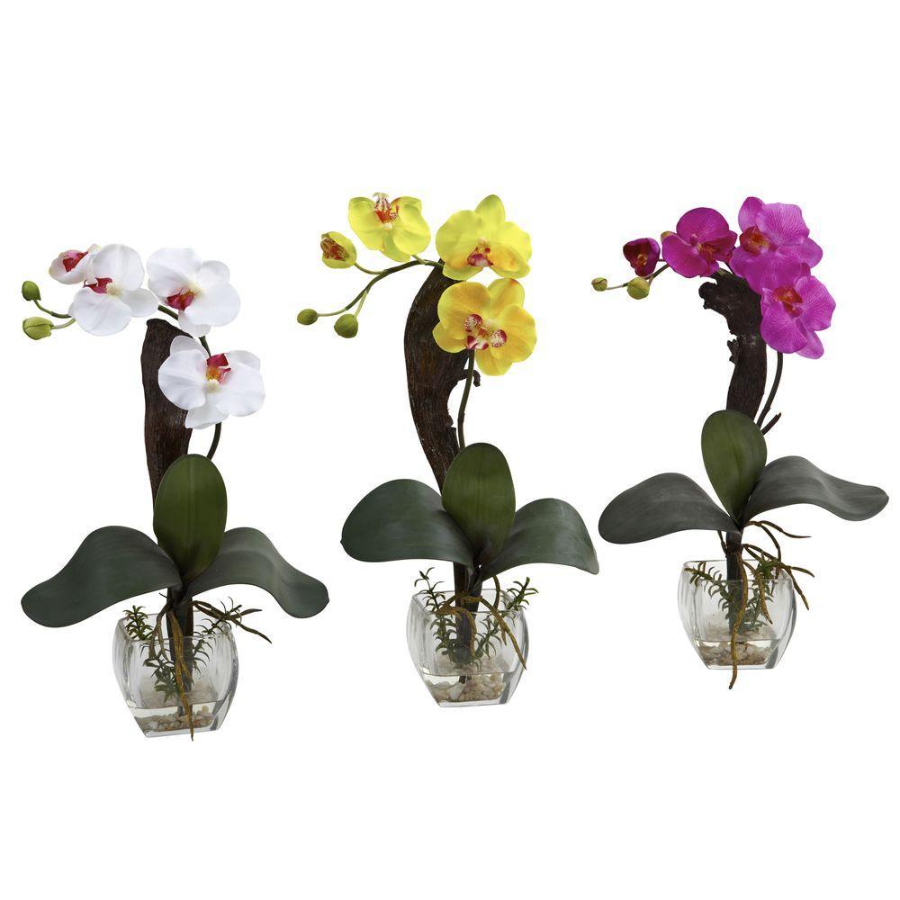 Mini Phalaenopsis Orchid Arrangement (Set of 3)