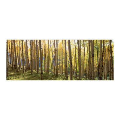 """63 in. x 24 in. """"Sunlit Colorado Trees"""" Tempered Glass Wall Art"""