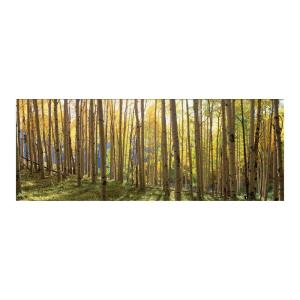 Deals on Yosemite Home Decor Sunlit Colorado Trees Tempered Glass Wall Art
