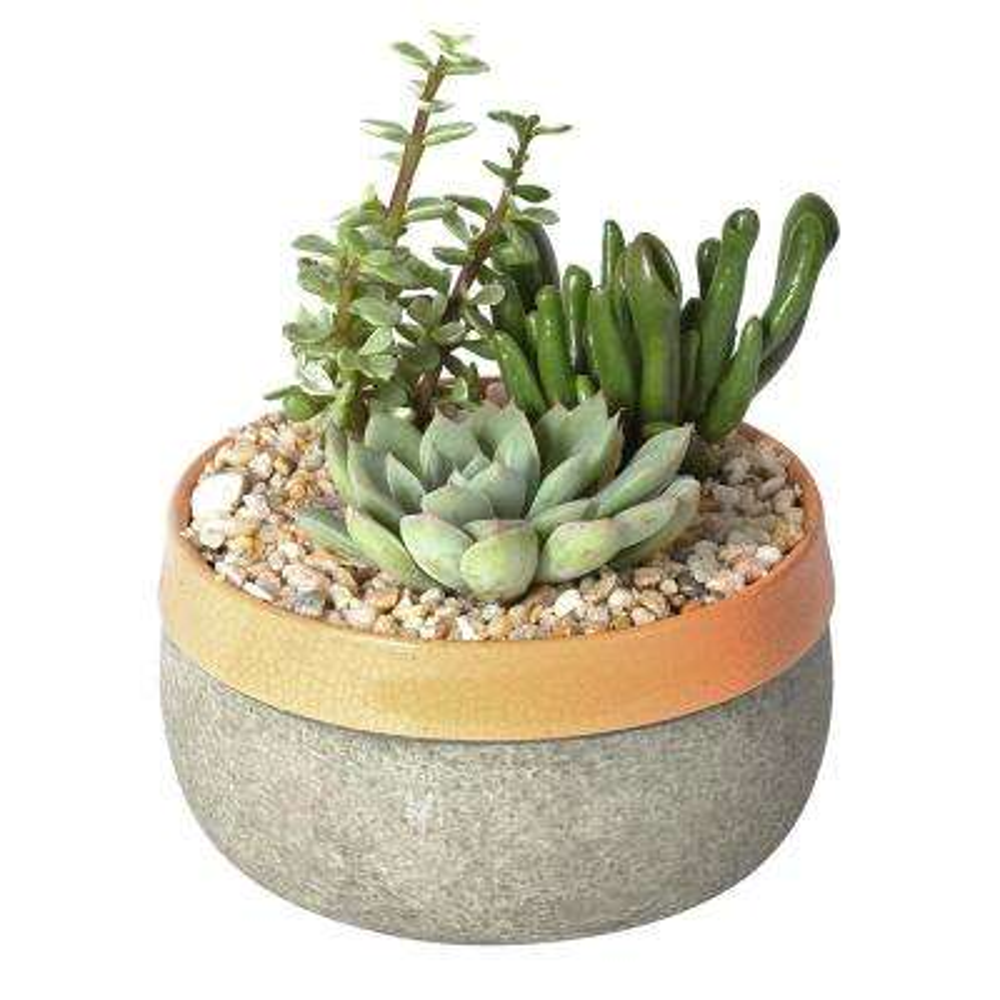 Cool Moon Succulent Garden in 6 in. Cement Duo Butterscotch Ceramic