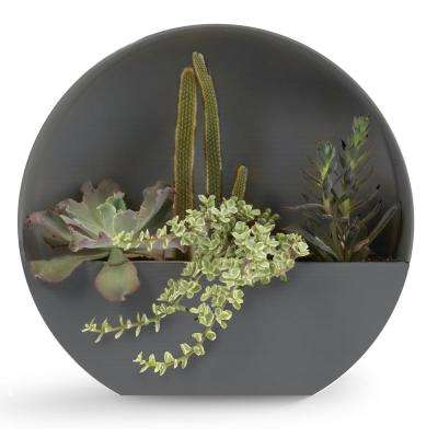 wall hanging succulent planters