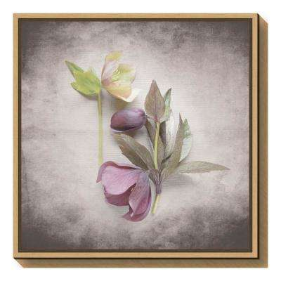 """Vintage Hellebore Study VII"" by Felicity Bradley Framed Canvas Wall Art"
