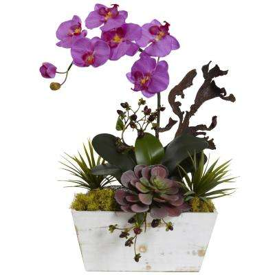 21 in. Orchid and Succulent Garden with White Wash Planter in Orchid
