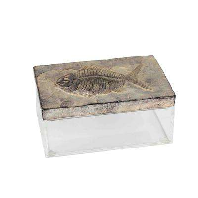 7.78 in. Resin/Acrylic Fossil Box