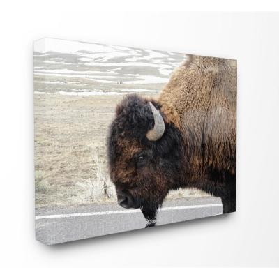 "24 in. x 30 in. ""Beautiful Buffalo Photography"" by In House Art Printed Canvas Wall Art"