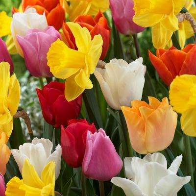 Tulips and Narcissus Bulbs Pot Luck Mixture (Set of 100)