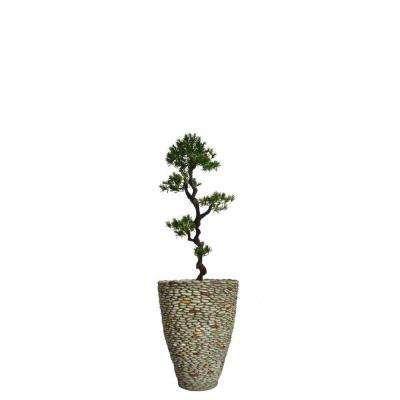 62 in. Tall Yacca Tree in Planter
