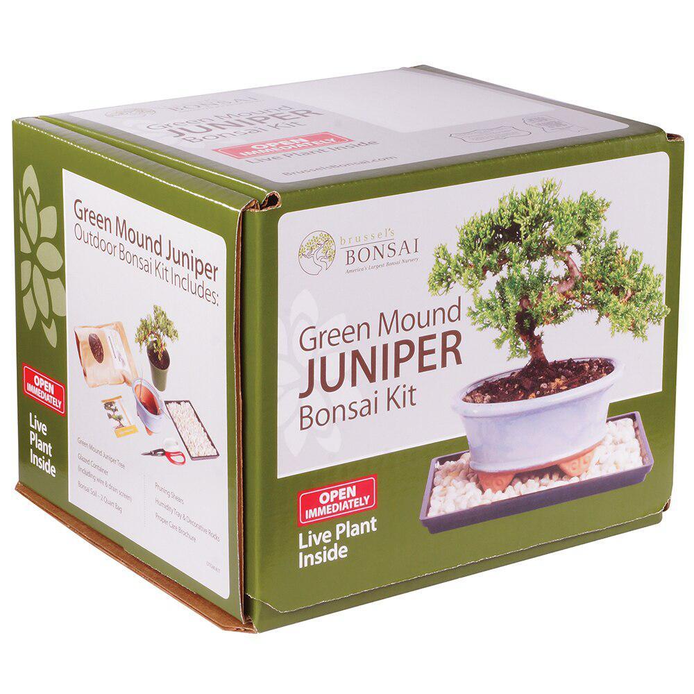 Juniper Bonsai Kit