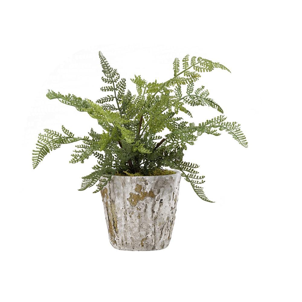 Indoor Lace Fern Plant in Rustic Terra Cotta Pot