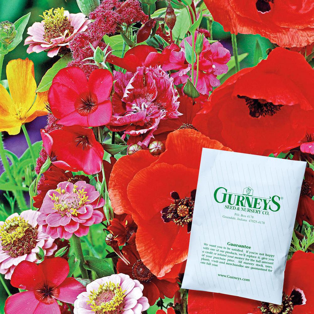 Gurney's Hummingbird and Butterfly Garden Annual Flowering Seed Mixture (300 Seed Packet)