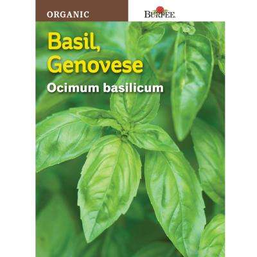 Genovese Organic Herb Basil Seed