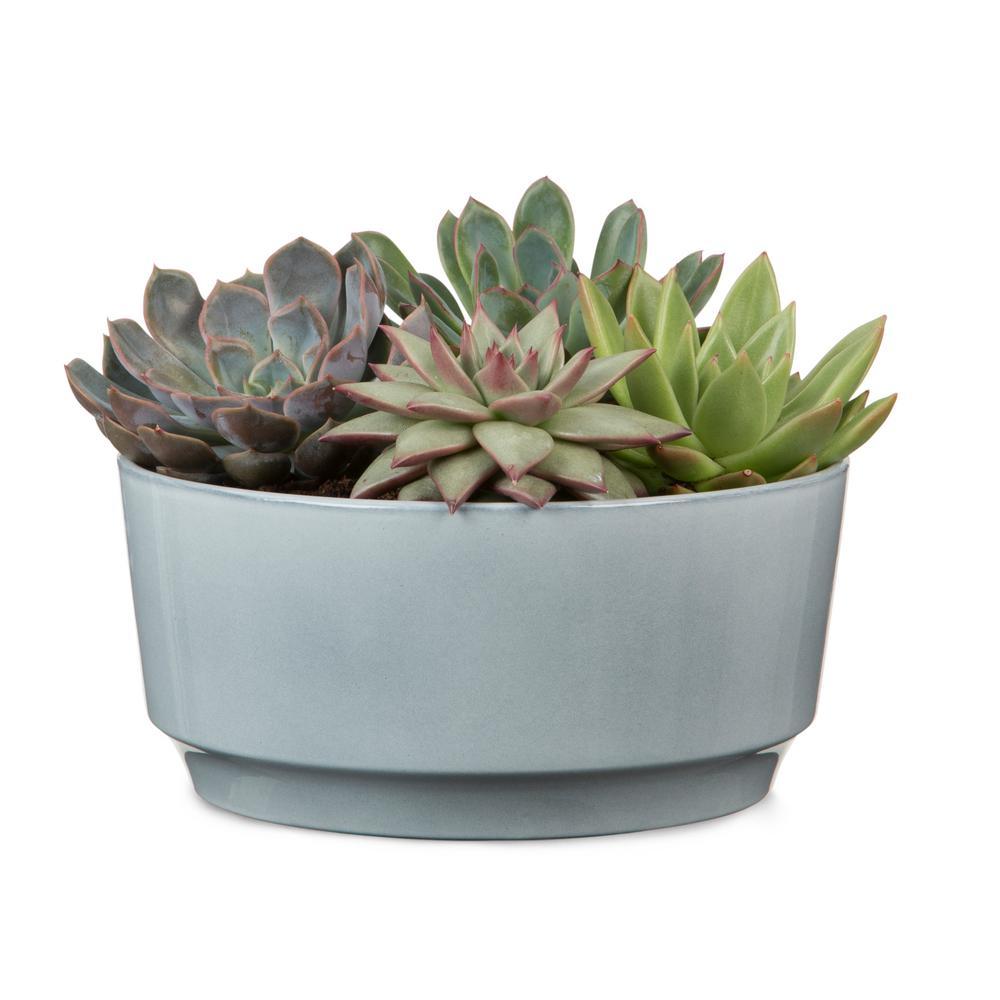 Scheurich 8.5 in. Dia Washed Denim Ceramic Pot