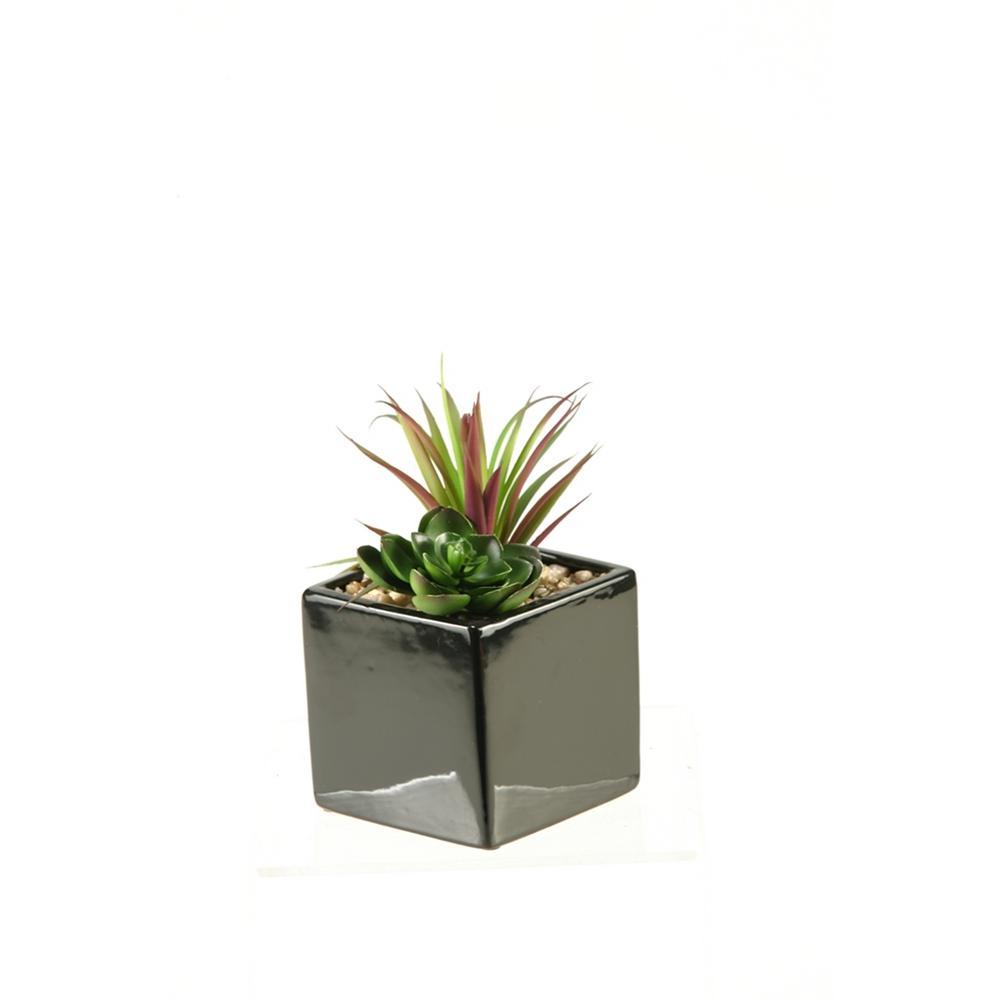 D&W Silks Indoor Succulent and Echeveria in Square Black Ceramic Planter