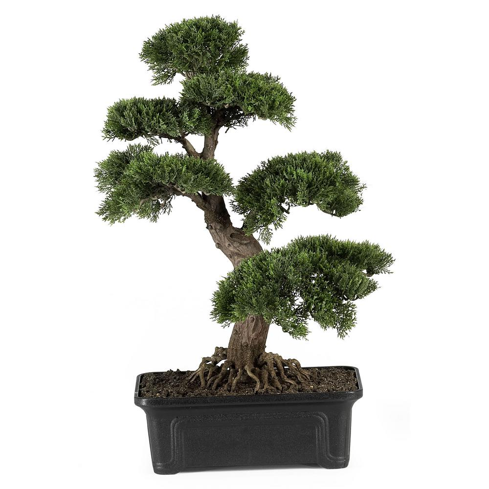 24 in. Cedar Bonsai Silk Plant