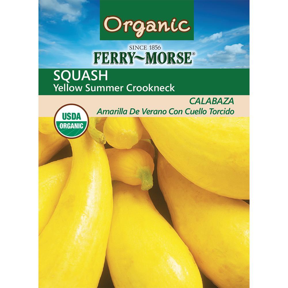Squash Yellow Summer Crookneck Organic Seed