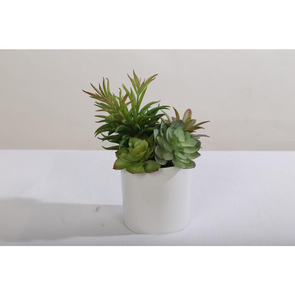 9.5 in. Assorted Succulent Arrangement in Plastic Pot Green