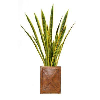 44 in. Tall Snake Plant in Planter